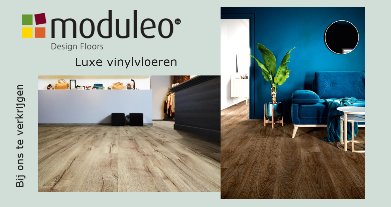 banner moduleo website.png
